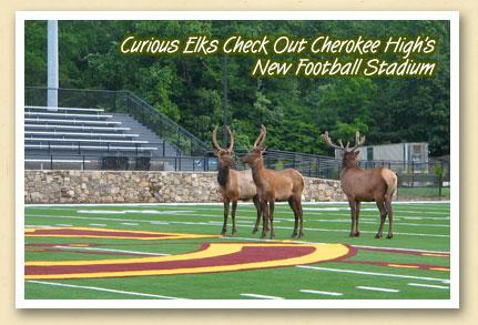 elk-at-school