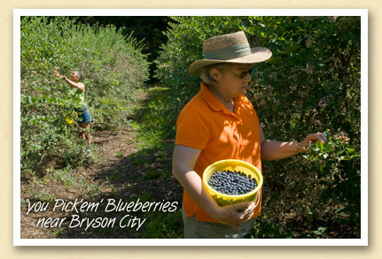 Pick your own blueberrry farm in Whittier, NC