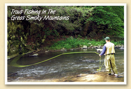 Postcards from the smokies can t wait for trout season for Nc hunting and fishing license prices
