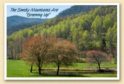 greening-up